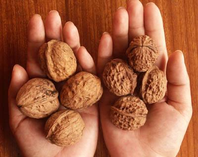 Walnuts2